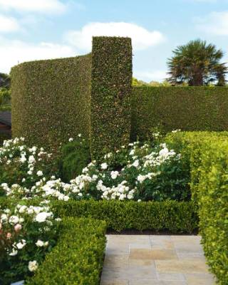 A professional hedge-trimmer comes every few months, but Chris trims frequently too.