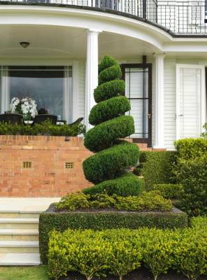 A spiral topiary at the steps of the main house.