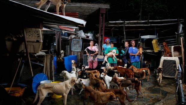 Maria Silva, Milena Cortes, Maria Arteaga, Jackeline Bastidas and Gissy Abello pose for a picture at the Famproa dogs ...