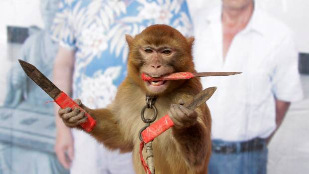 A monkey catches knives as it balances on a board during a daily training session at a monkey farm in Baowan village, ...