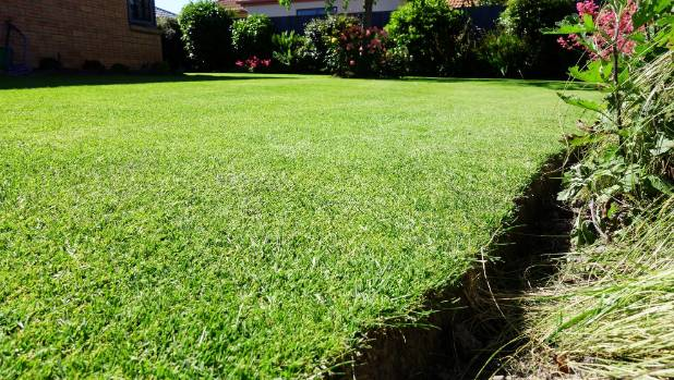 The beautiful meadow grass front lawn of Tony French.