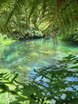 Putaruru Blue Spring is one of the nation's best kept secrets according to locals who walk it frequently.