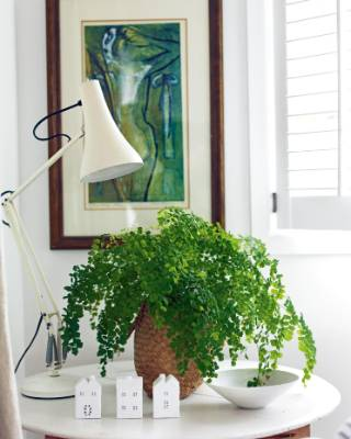 An Anglepoise lamps leans over a maidenhair fern; the print by Alison Pickmere came from Louise's mother.