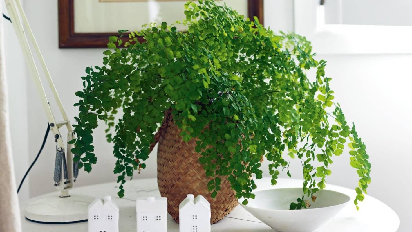 House plants that aren't afraid of the dark   Stuff.co.nz