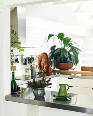 A giant peace lily and a Tony Sly jug add splashes of green to the mostly white kitchen, which offers unimpeded views of ...