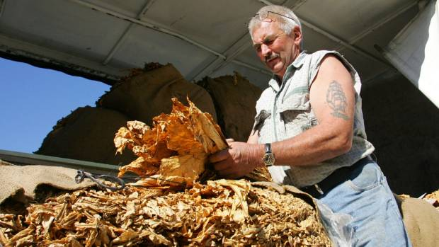 It is not the first time Customs has had to return tobacco it seized from Jury. Here he is in 2007, reunited with a crop ...