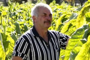 Tobacco grower Laurie Jury with tobacco plants at his Pangatotara farm in Motueka Valley. (File photo)