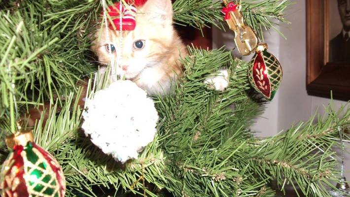 Furry Friday: Cats at Christmas   Stuff.co.nz