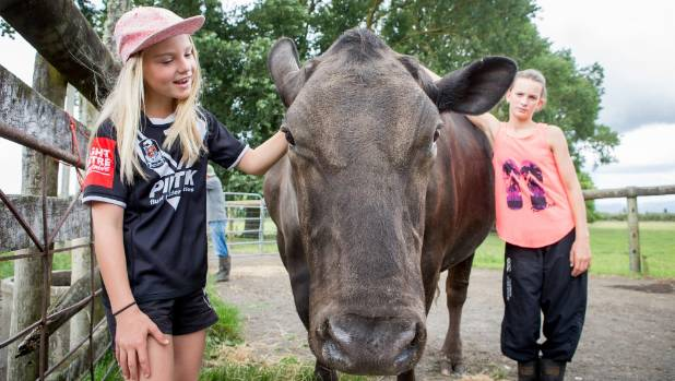 Maddy Hill, nine, left, and Breanna Hill, 12, have a cuddle with Henry, their grandparents' pet steer.