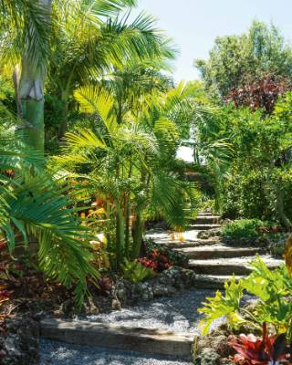 This stepped pathway is lined with fishtail palms, Dypsis baronii (sugar cane palms) and nikau and is partly made from ...