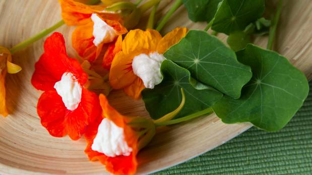 Ricotta-stuffed nasturtium blooms is a great way to clear the garden of too many flowers.
