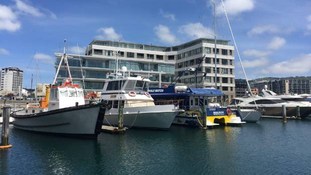 One of three Whale Watch boats being stored in Wellington. For almost two months, Whale Watch Kaikoura was unable to ...