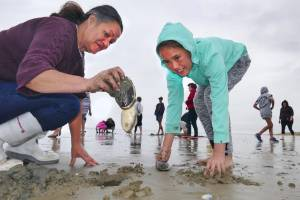 Mo Pikia and Mya Blair, 9, digging for toheroa on Oreti Beach with family for Shaila Pikia's wedding feast to be held at ...