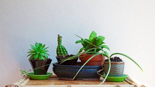 Houseplants can survive a solo spell with a bit of special attention.