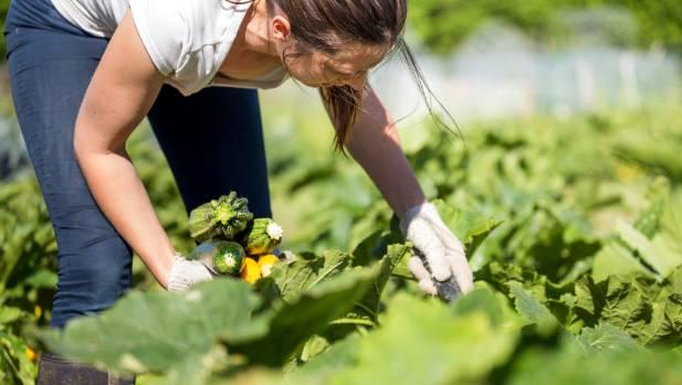 Vege grower Aimee Burton in the garden.