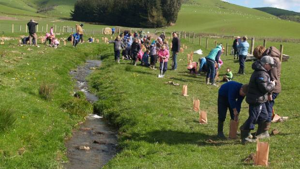 A school-farmers' planting bee on a tributary to the upper Pomahaka River in Otago.