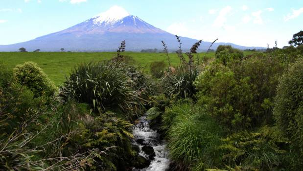 Farmers have planted the banks of this tributary of the Oeo Stream west of Mt Taranaki..