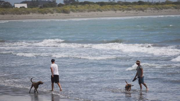 A sunny day in Christchurch calls for a trip to the beach, although gusty nothwesters in the afternoon may turn people off.