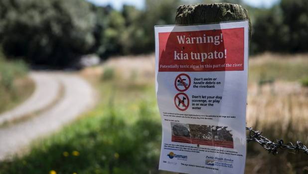 A sign warns of toxic algae (cyanobacteria/phormidium) on the banks of the Wai-iti River, at the top of the South Island.
