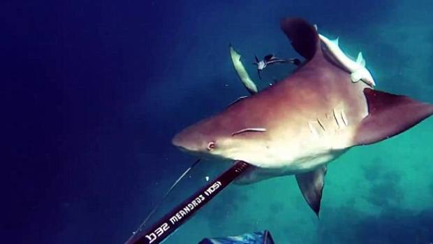 Spearfisherman Gets Up Close & Personal With Angry Bull Shark