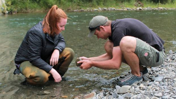 Davies searching for invertebrates to better understand stream health.