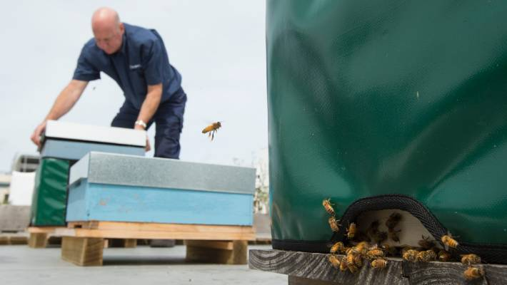 d0a35d2d0d2da Urban beehives on the rise in Christchurch as businesses and ...