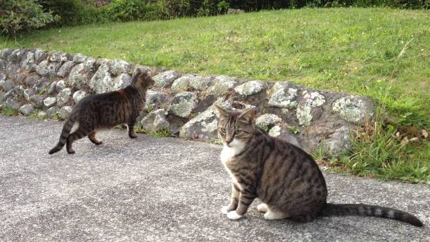 Maud and Bobby explore their neighbour's driveway. Their journey next door was a breakthrough.