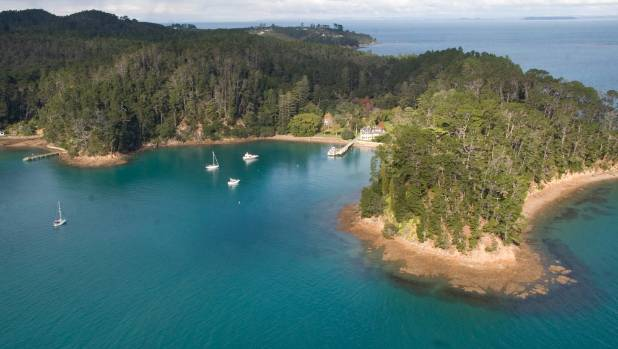 Around 80 hectares of Kawau Islamd Historic Reserve's 120 hectares is covered in wilding pines.