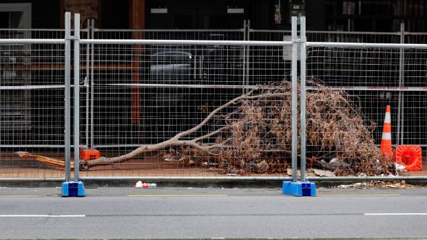 No-one appears to know how the mystery tree or branch ended up behind earthquake cordon lines in Courtenay Place.