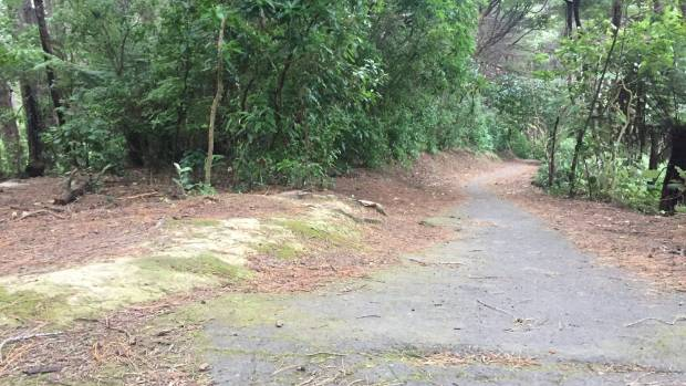 The walking track in Wellington's Prince of Wales Park where a woman was startled by a man masturbating.