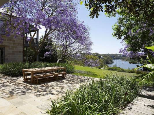 Jacaranda trees are in full bloom in early summer.