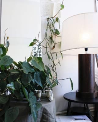 Plants invoke a sense of calm in Tuck's flat.