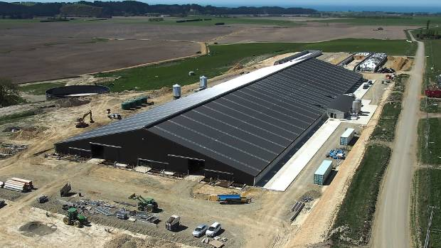 A giant dairy barn owned by Van Leeuwen Dairy Group. Jeremy Talbot says some operations feeding alternative diets are a ...
