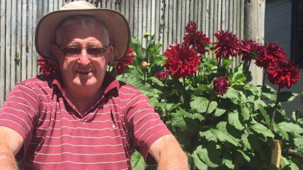 Brightwater Horticultural Society president Arch Crerar with a plot of a royal red dahlias, The society holds its annual ...