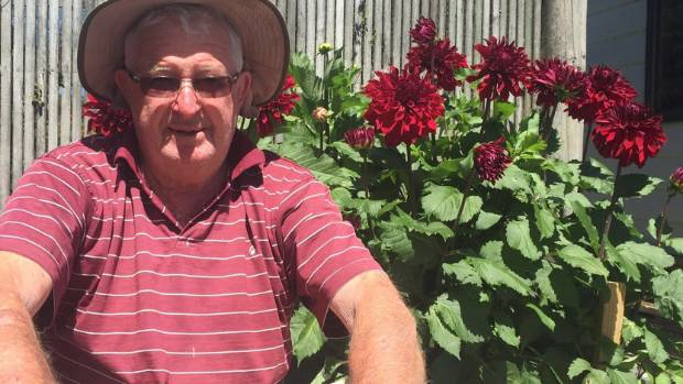Brightwater Horticultural Society president Arch Crerar  with a plot of a royal red dahlias, The society holds its ...