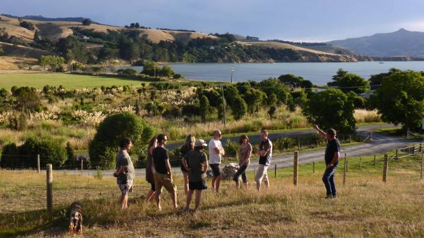 In a field near you: Friends of Banks Peninsula view  paddocks in Robinsons Bay where a wastewater pond could go.