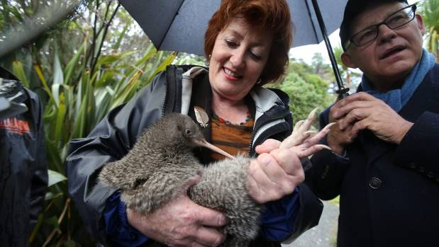 Minister for Conservation Maggie Barry with a little spotted kiwi.