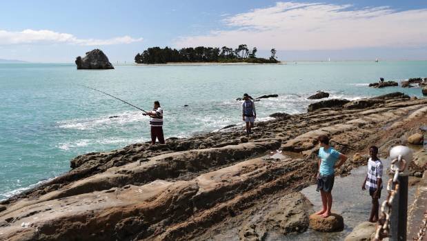 Auckland fishing family hooks massive kahawai catch off for Landscaping rocks auckland