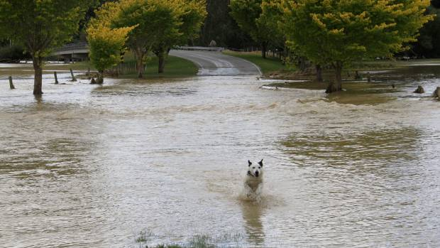 Ozzie the dog was happy to see floodwater at Waikaia on Monday - but no-one else was.