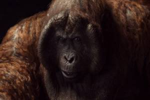 There were two main sources of inspiration for King Louis - Christopher Walken, and a giant ape species that became ...