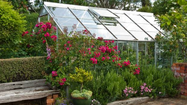 A glasshouse allows you to extend the growing season by giving them an almost endless summer.