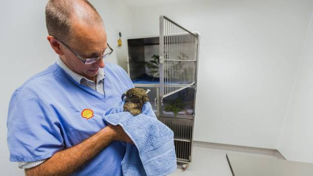 Wildbase director Brett Gartrell holds a kea, which was one of the first animals to be transferred to the new site.
