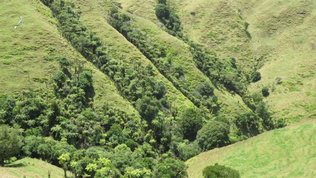 Steep grass hills are regularly bisected by deep bush-covered, water-carrying gullies.
