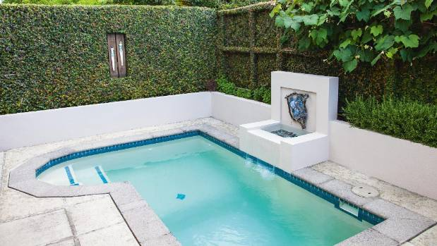 Ficus provides a more attractive backdrop than a plain fence for a Tauranga plunge pool.