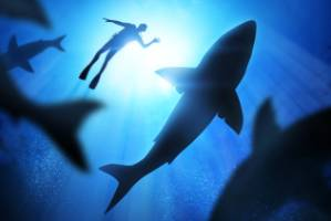 You're far more likely to drown in the water than get killed by a shark, so why are we more afraid of the latter?