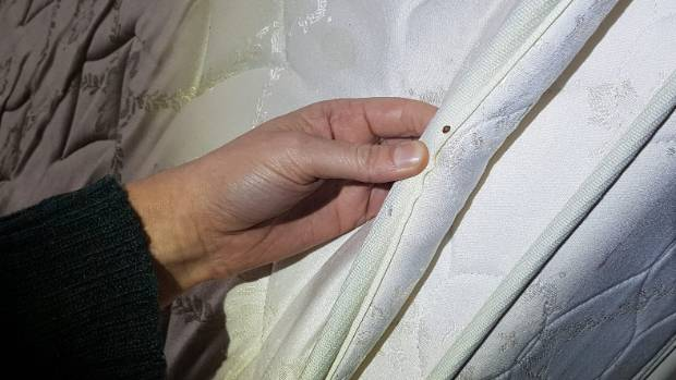 Bed Bugs On The Rise In Wellington Beware When Travelling Expert