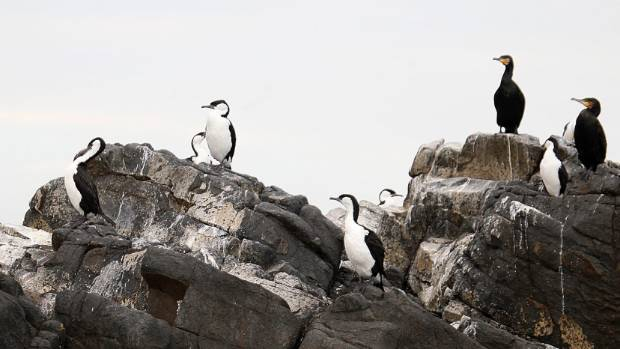 Seabirds are a challenging group to manage because of their large oceanic distributions and remote breeding colonies.