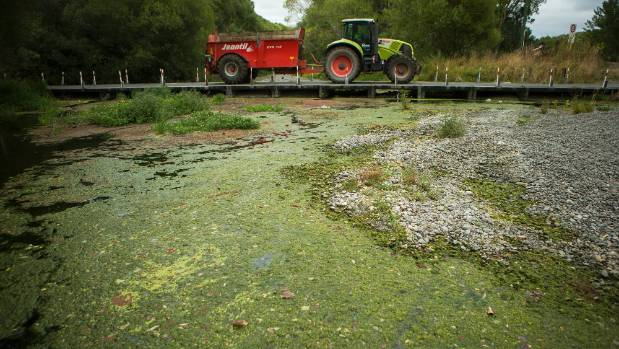 Coes Ford has virtually stopped flowing and is covered in algae.
