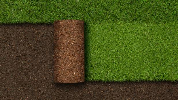 Natural turf ($20-$26 per square metre) is a lot cheaper to lay than artificial turf ($160-$180 per square metre).