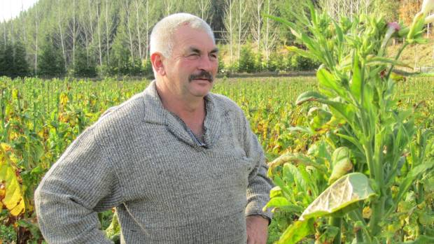 Laurie Jury had hoped to sell a crop to a  South Island registered manufacturer. (File photo)